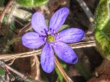foton-natur066