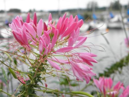 Blommor i Mariestad