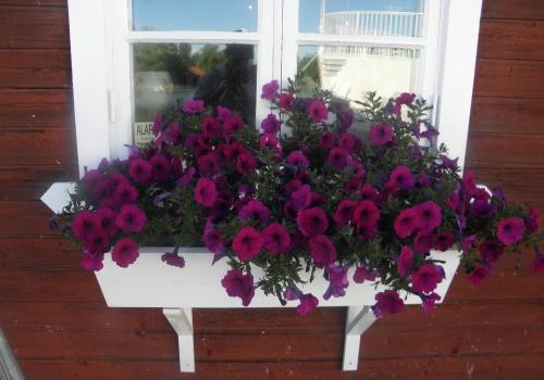 Blommor i Sjötorp