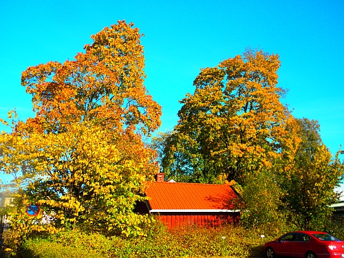 Höstträd i Kristinehamn
