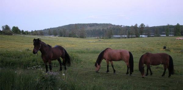Hästar ett stenkast från logen